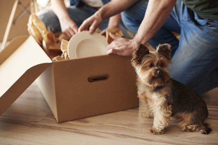 Making your Pet ready for a Home Move